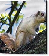 A Fox Squirrel Pauses Canvas Print by Betsy Knapp