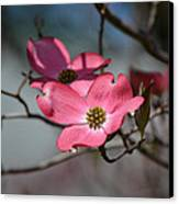 A Kiss Of Pink Canvas Print by Mary Zeman