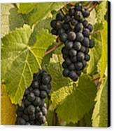 A Pair Of Clusters Canvas Print by Jean Noren