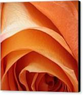 A Pareo Rose Canvas Print by Joe Kozlowski