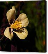 A Pretty Flower In The Sun Canvas Print by Jeff Swan