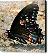 A Real Beauty Canvas Print by Marty Koch