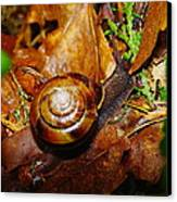 A Slow Snail Canvas Print by Jeff Swan