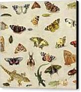 A Study Of Insects Canvas Print by Jan Van Kessel