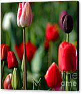 A Tapestry Of Tulips Canvas Print by Nick  Boren