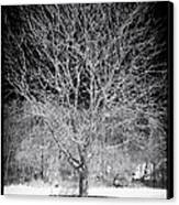 A Tree In The Snow Canvas Print by John Rizzuto
