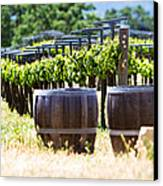 A Vineyard With Oak Barrels Canvas Print by Susan  Schmitz