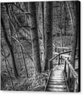 A Walk Through The Woods Canvas Print by Scott Norris