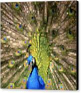 Abstract Peacock Digital Artwork Canvas Print by Georgeta Blanaru