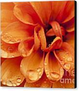 After The Rain Canvas Print by Anne Gilbert