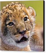 Age Of Innocence Canvas Print by Ashley Vincent