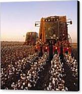 Agriculture - Cotton Harvesting  San Canvas Print by Ed Young