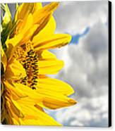 Ah Sunflower Canvas Print by Bob Orsillo