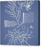 Algae Canvas Print by Aged Pixel