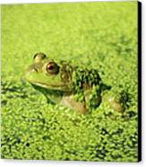 Algae Covered Frog Canvas Print by Optical Playground By MP Ray