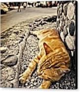 Alley Cat Siesta In Grunge Canvas Print by Meirion Matthias