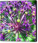Allium Series - Close Up Canvas Print by Moon Stumpp