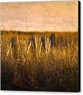 Along The Fence Canvas Print by Bill  Wakeley