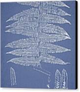 Alsophila Ornata Canvas Print by Aged Pixel