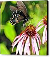 Amazing Butterfly Canvas Print by Marty Koch