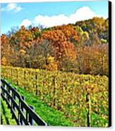 Amish Vinyard Two Canvas Print by Frozen in Time Fine Art Photography