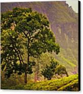 Among The Mountains And Tea Plantations. Nuwara Eliya. Sri Lanka Canvas Print by Jenny Rainbow