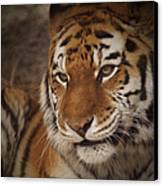 Amur Tiger 4 Canvas Print by Ernie Echols