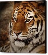 Amur Tiger Canvas Print by Ernie Echols