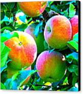 An Apple A Day Canvas Print by Kay Gilley