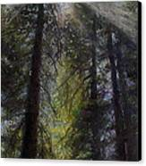 An Enchanted Forest Canvas Print by Mary Giacomini
