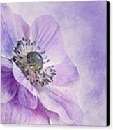 Anemone Canvas Print by Priska Wettstein