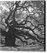 Angel Oak II - Black And White Canvas Print by Suzanne Gaff