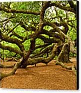Angel Oak Tree Branches Canvas Print by Louis Dallara