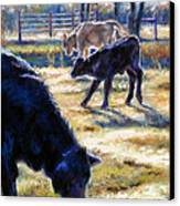 Angus Calves Out With Dad Canvas Print by Denise Horne-Kaplan