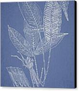 Anisogonium Lineolatum Canvas Print by Aged Pixel