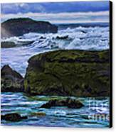 Ano Nuevo Seagull Canvas Print by Blake Richards