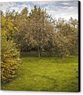 Apple Orchard Canvas Print by Amanda And Christopher Elwell