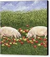 Apple Sows Canvas Print by Ditz