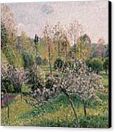 Apple Trees In Blossom Canvas Print by Camille Pissarro