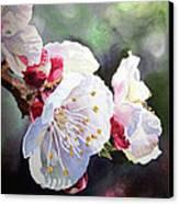 Apricot Flowers Canvas Print by Irina Sztukowski