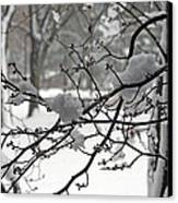 April Snow Canvas Print by Kay Novy