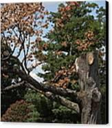 Arlington National Cemetery - 121242 Canvas Print by DC Photographer