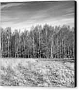 Ashdown Forest Trees In A Row Canvas Print by Natalie Kinnear