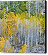 Aspen Stand Canvas Print by L J Oakes