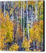Aspen Tree Magic Cottonwood Pass Canvas Print by James BO  Insogna