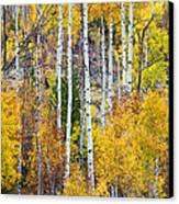 Aspen Tree Magic Canvas Print by James BO  Insogna