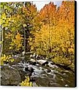 Aspens At Bishop Creek Canvas Print by Cat Connor