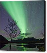Auroras And Tree Canvas Print by Frank Olsen