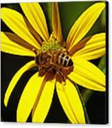 Australian Bee Snacktime Canvas Print by Margaret Saheed