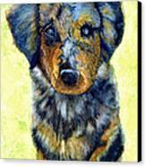 Australian Shepherd Puppy Canvas Print by Janine Riley